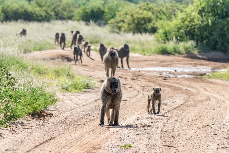 Samburu (64 of 70).jpg