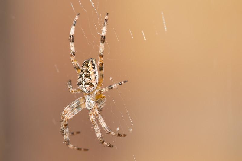 spider2-1.jpg
