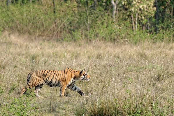 Wildlife & Wild Places