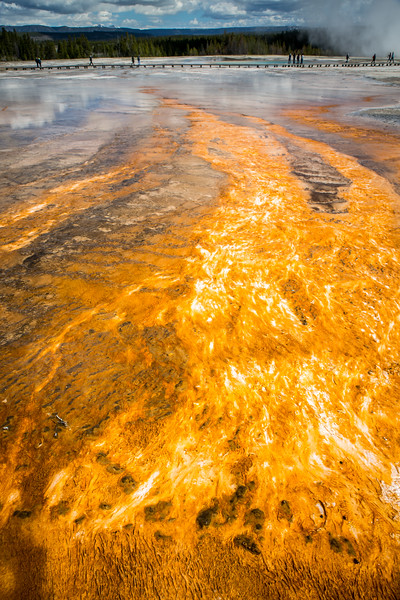 Thermophile Bacteria mats around Grand Prismatic Spring