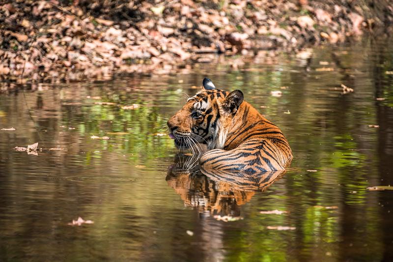 India_April_2019-1108.jpg