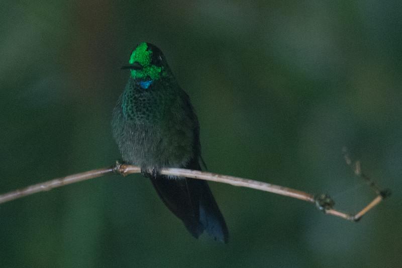 19-Sept Costa Rica Birds-2047.JPG