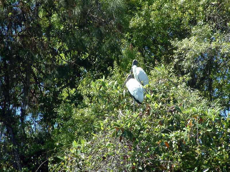 Tarpon Springs FL Wildlife (3).jpg