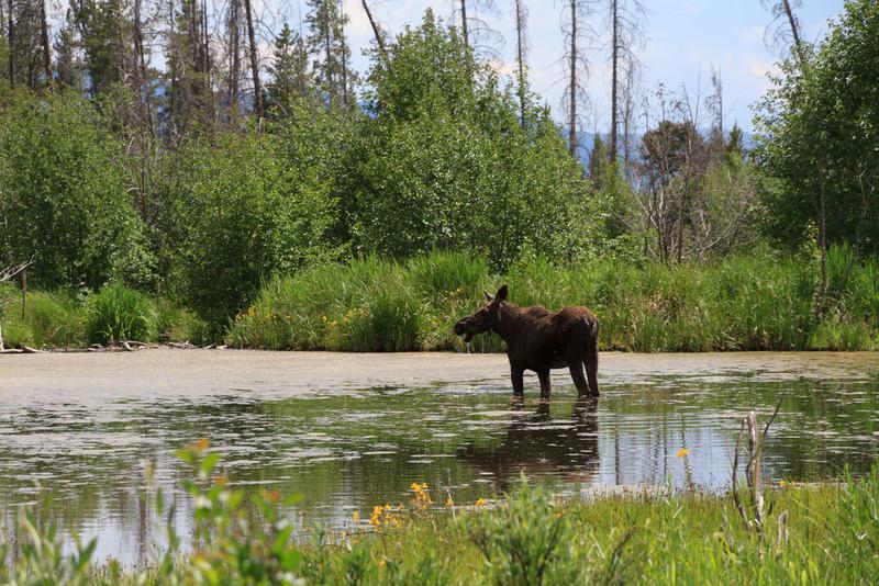 2011_07_05 Wyoming 127.jpg