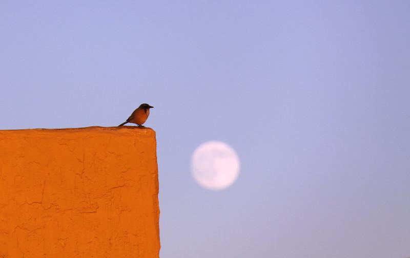 Bird presiding over the moon, Oakland, CA