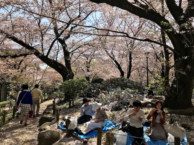 Locals having hanami parties at Sumidagawa Park.