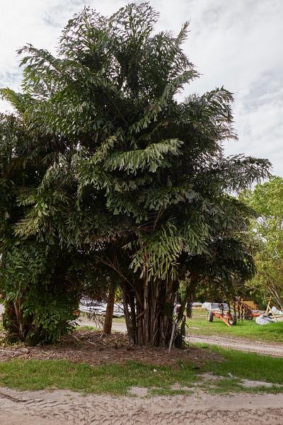 Useppa-Botanical-Walk-249.jpg