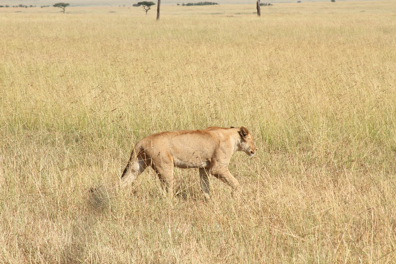 Kenya Part2 '15 578.JPG