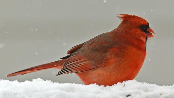 Wild Birds 2021-01-27