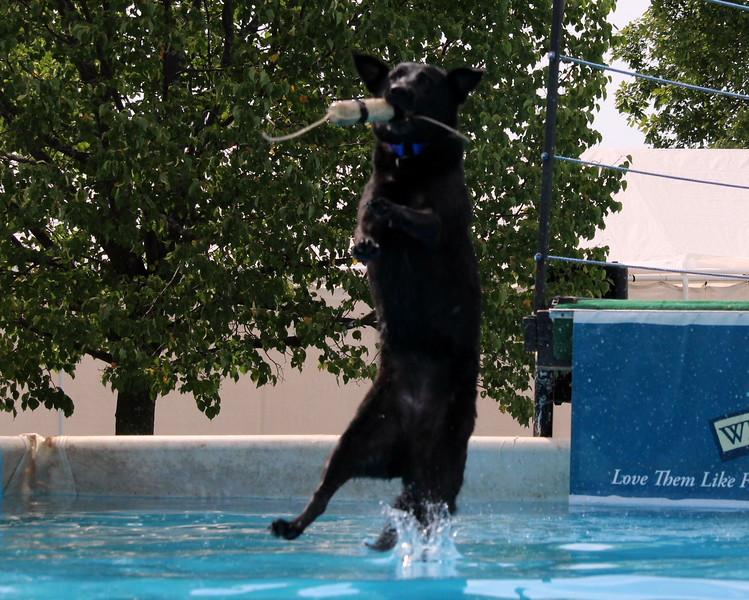 2015.8.6 Winnebago County Fair Dock Dogs (83).JPG