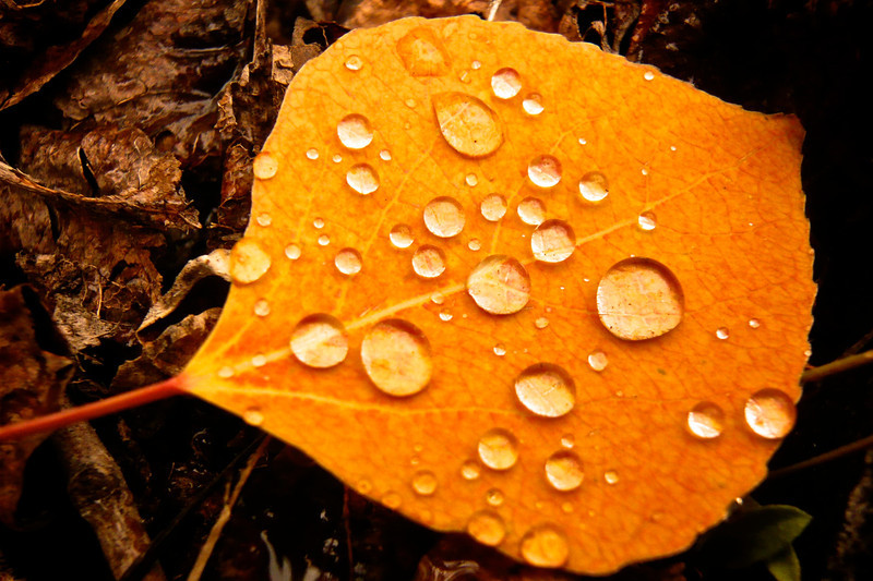 Durango Fall 2008 30