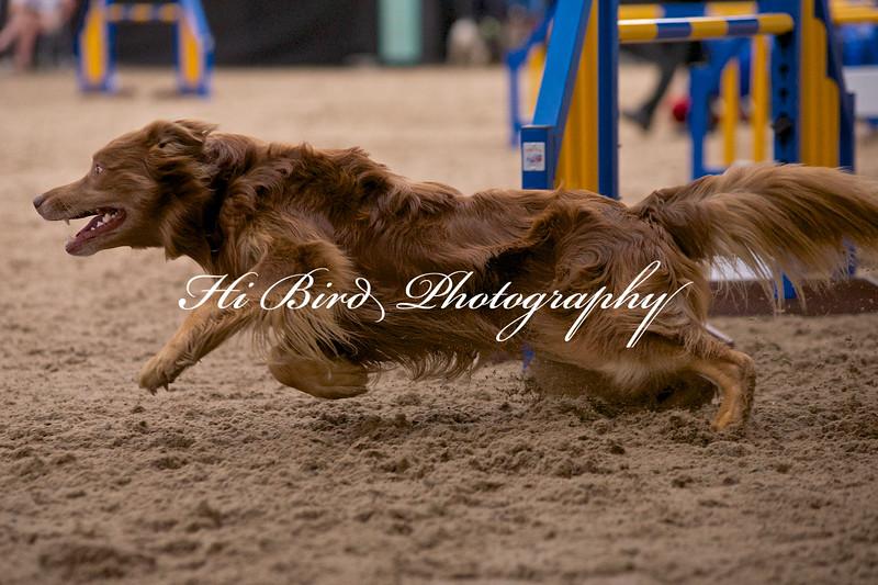 Large dog jumping  1088.jpg