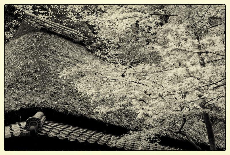 20121122_454_Mono_Upload.jpg