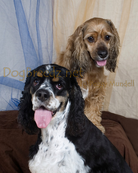 Grooming Lounge  - Bailey and Parker Cory