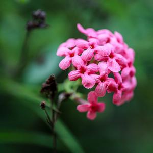 Botanic Gardens / Penang