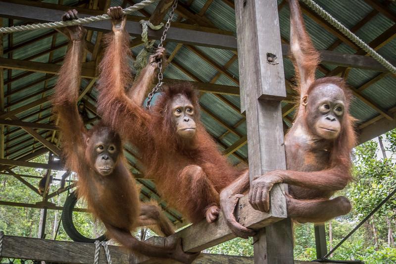 Borneo-2241.jpg
