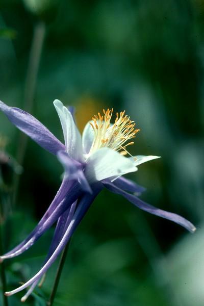 amh FLOWERS (1240).jpg