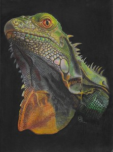 """""""Roxanne"""" (colored pencil) by Patricia Gauss"""