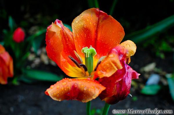 May 2009 - Sicilian Flora & Fauna