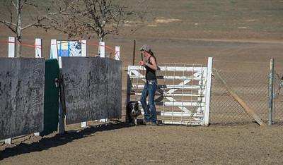 Cattle Herding 17Jan2014