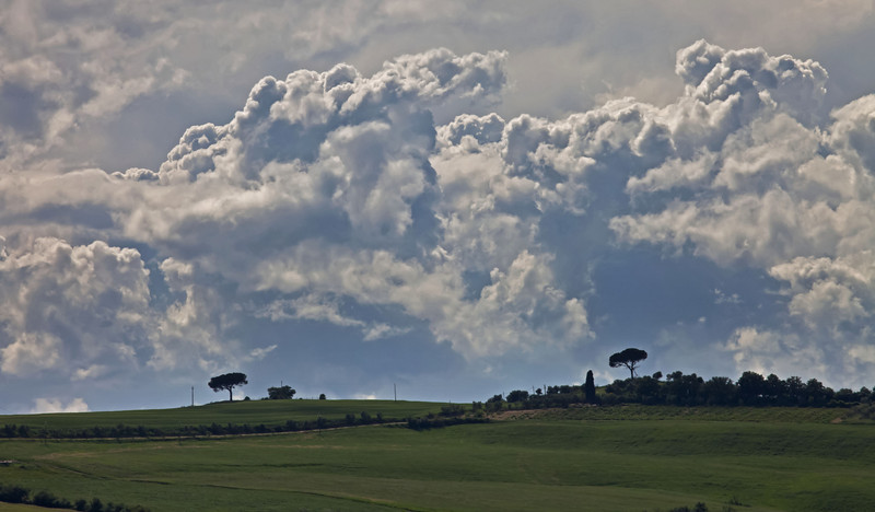 Tuscan Majesty