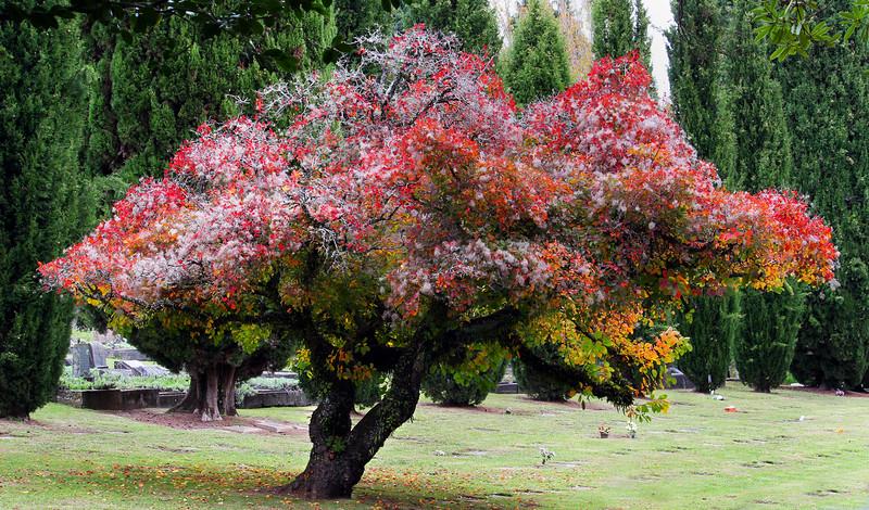 Tree at cemetary.jpg