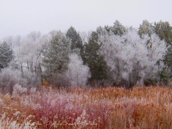 frosty shelterbelt