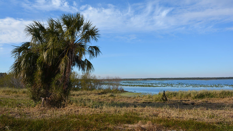 Lake to horizon with palm tree in foreground