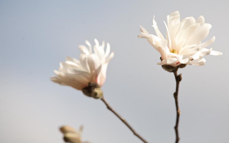 20100329_Flowers16.jpg