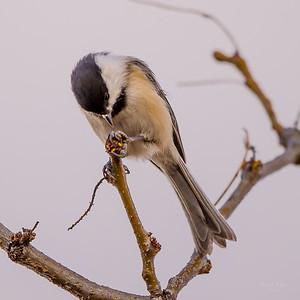 Early Birds Spring 2017