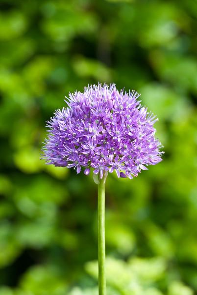 Flower-0232