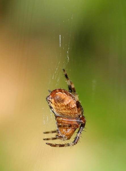 0928 Spider.jpg