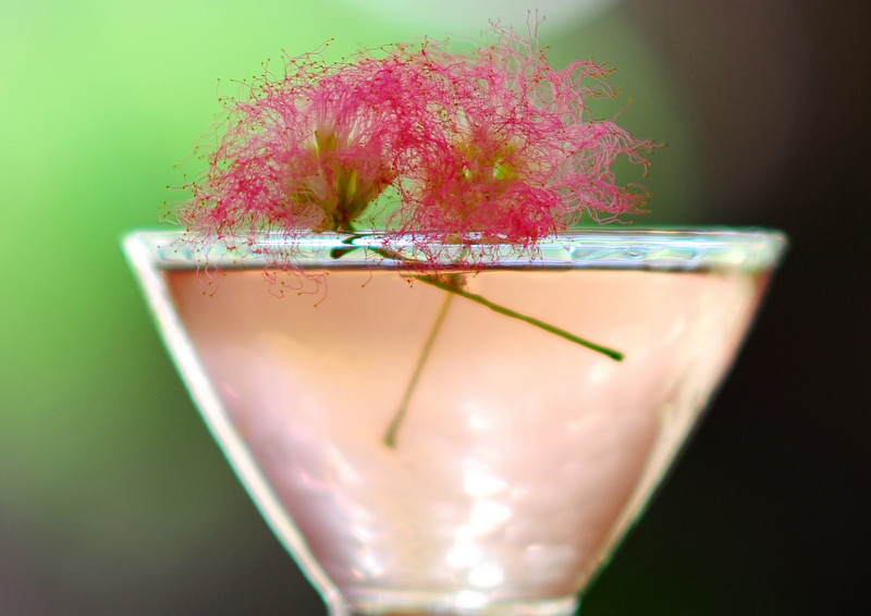 """Photograph of """"Pink Amanda Martini"""" made with iS Vodka especially for Amanda Lepore. A """"Pink Amanda Martini"""" is made with iS Vodka, Sprite, Fresh Limejuice, and a Dash of Organic Berry Juice for color. Garnish with a fresh sprig of Mimosa. * """"Pink Amanda Martini""""  2.5 oz. ISVodka 3 oz. Sprite 1 oz. Lime Juice Dash of Organic Berry Juice Sprig of Mimosa  Combine ISVodka, Sprite and lime juice in a shaker. Add ice, shake well. Strain into a martini glass. Add a dash of berry juice for color. Garnish with a sprig of fresh Mimosa. Tickles you pink and is uniquely fun!  * IS Vodka http://www.isvodka.com is a super-pure, ulta-premium vodka distilled 7 times, mixed with glacier water from the land of ice and snow - Iceland."""