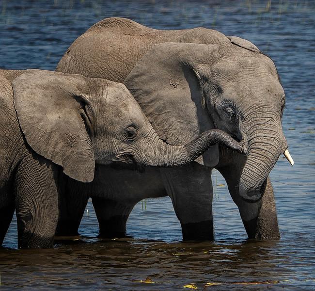 2014-08Aug-Okavango Masters-76-Edit.jpg
