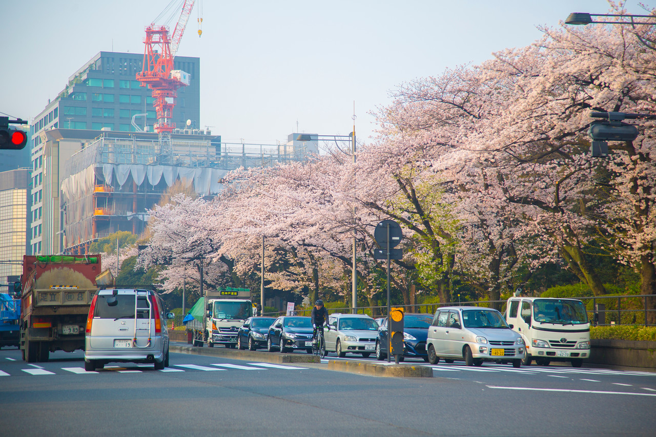 sakura hanami tokyo 2018