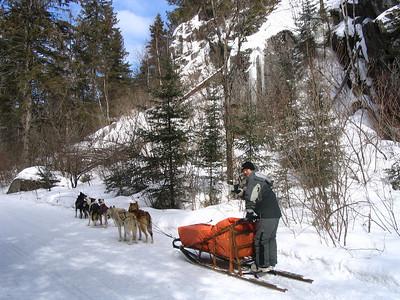 Alconquin Park dog sledding