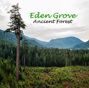 Eden Grove Ancient Forest - Video
