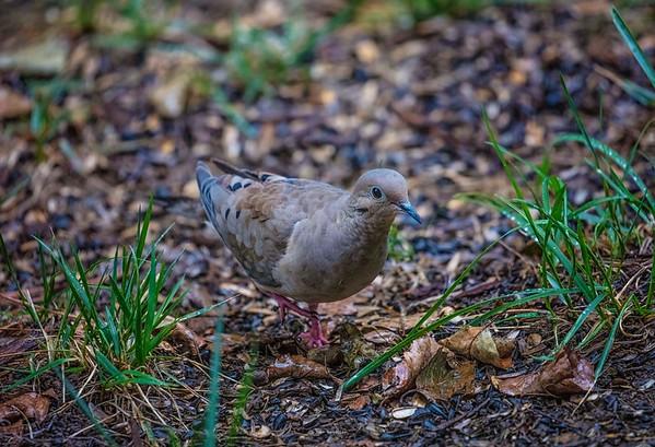 Backyard Birds  are Back