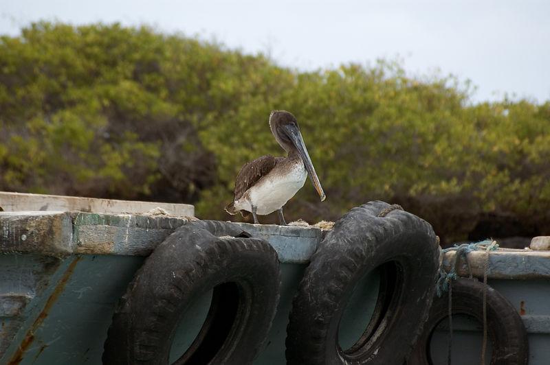 Pelican on edge of pier   (Dec 10, 2005, 01:31pm)