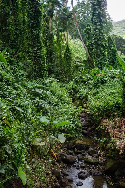 Hawaii2019-831.jpg