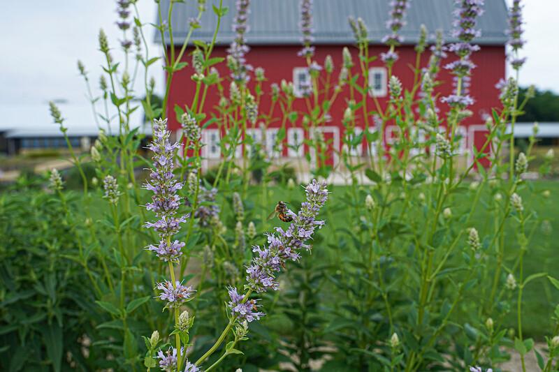 Arboretum, July Harvest-79.JPG