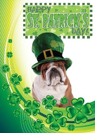 Teddy St Patricks Day Front-01.jpg
