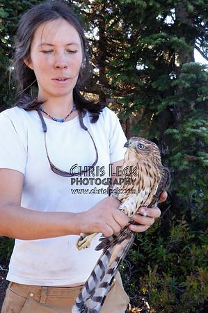 Bonney Butte Raptor Migration Project, Sept. 7, 2005