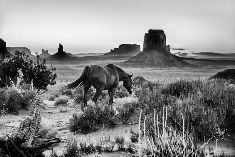 Horses in the Valley.jpg