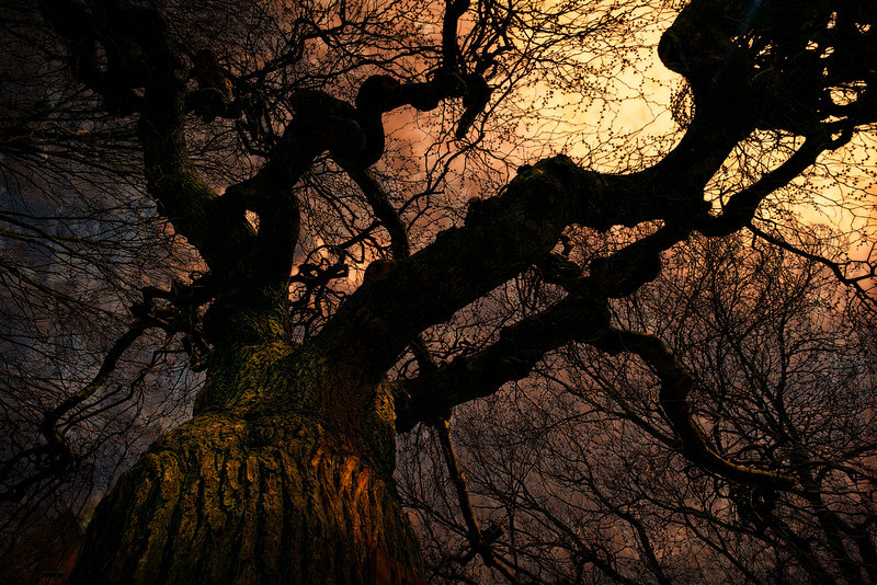 The Third Tree F0208.jpg