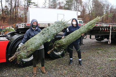 Operation Saves Trees for Soldiers
