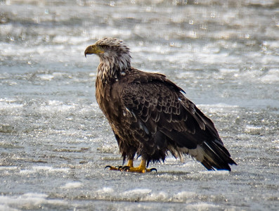 03-28-2019-eagles