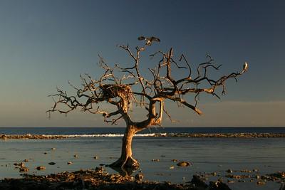 Belize 2006 (March)