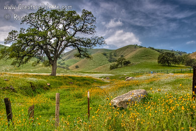 Tulare County Foothills - Dry Creek Drive - Spring Wildflowers before the Storm