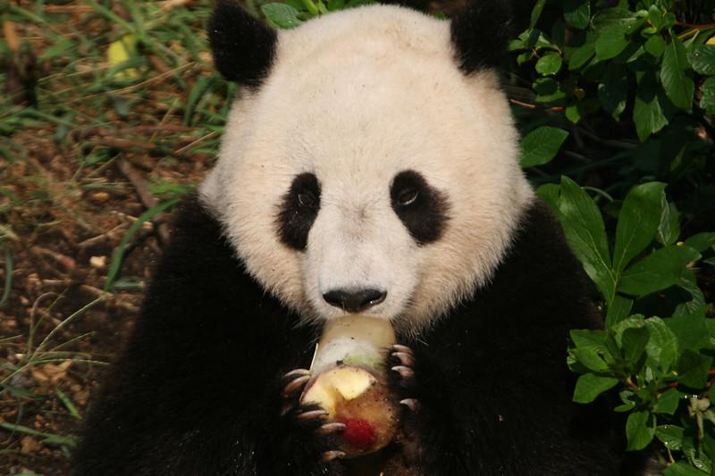 Panda072807_073.JPG